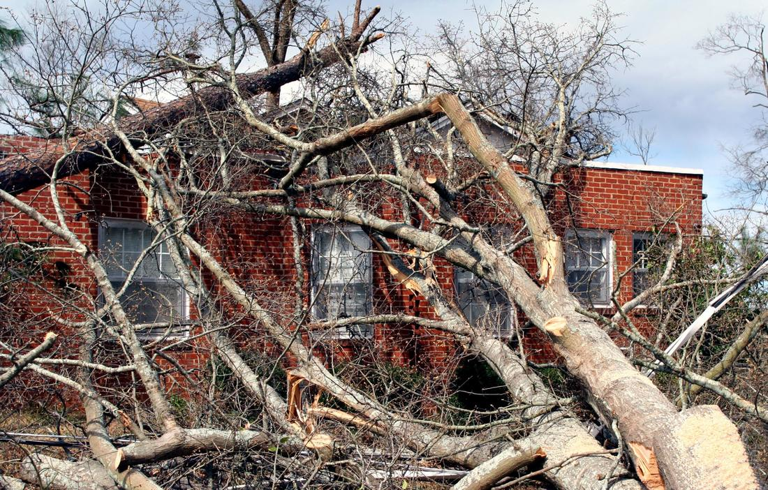 This is a picture of a storm damage trees.